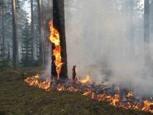 b_220_0_16777215_00_images_news_2012_forestfire.jpg